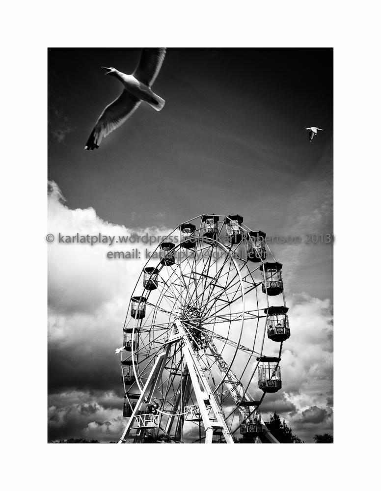 Ferris Wheel and Seagull