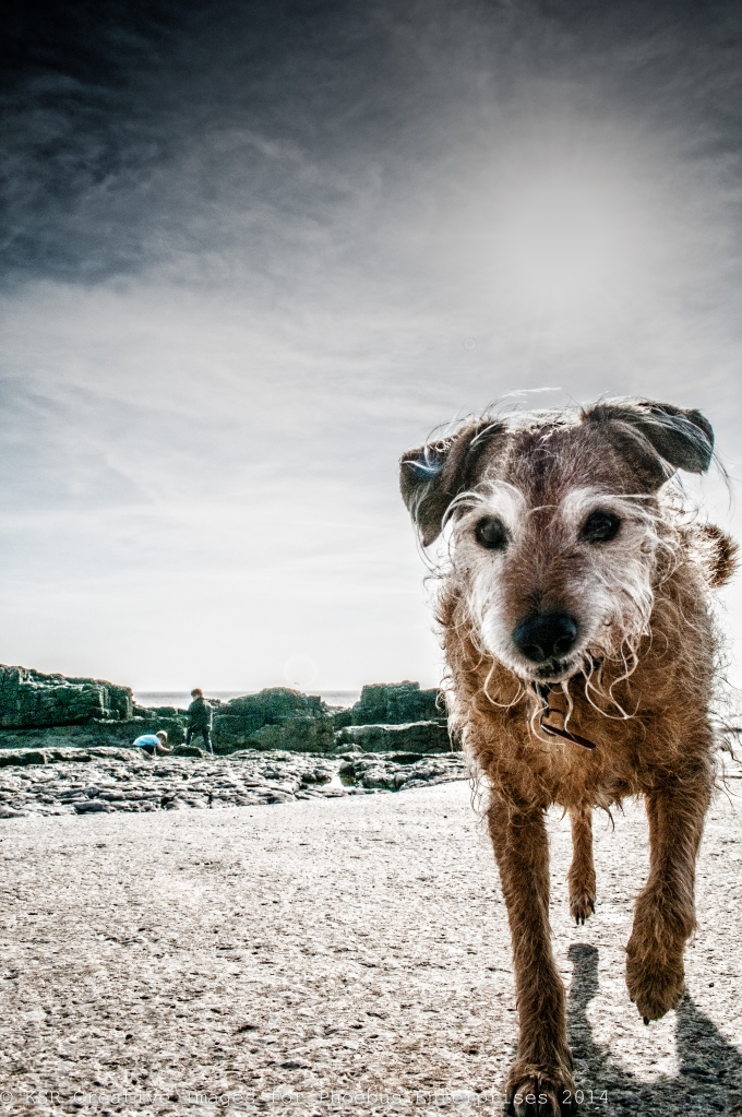 Wet dog, Porthcawl 2014