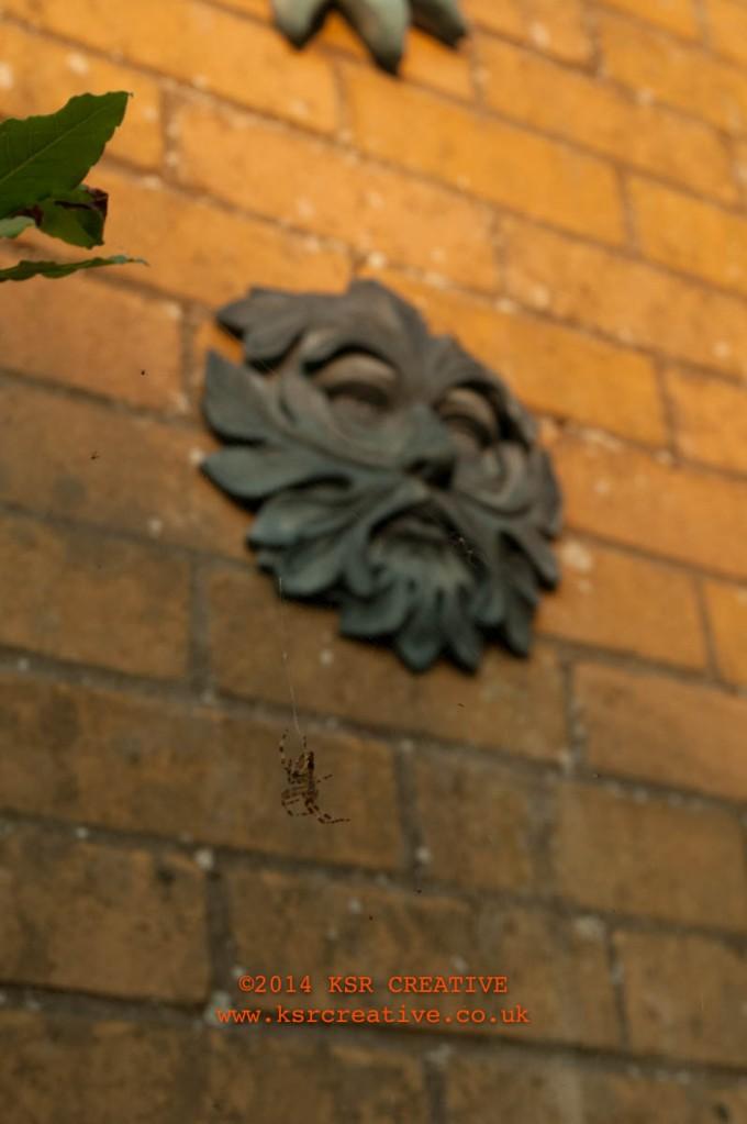 Spider under sun