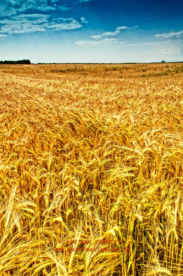 Fields on the way out of Porthcawl towards Kenfig Pool