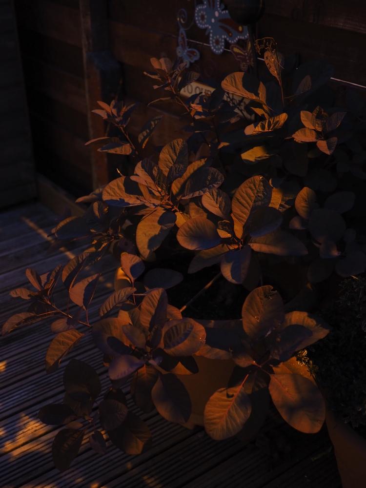 Street light on leaves