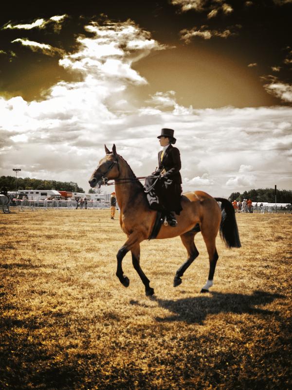 test-horse.jpg