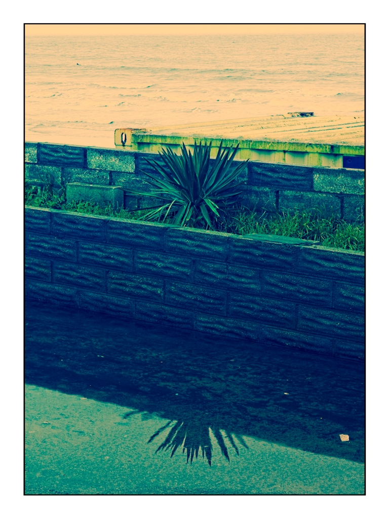 Spiky Palm after winter rain. Porthcawl January 2020